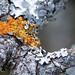 Lichens by DaveSticker