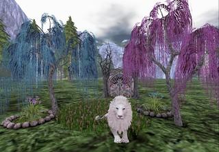 Aslan at Rest