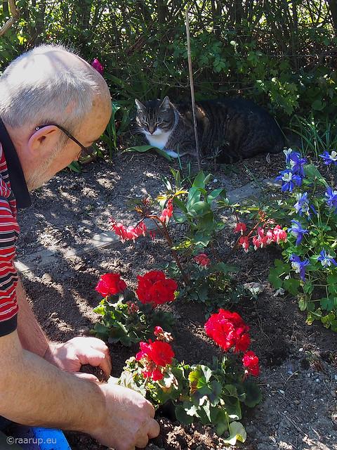 The garden assistant - Happy Caturday