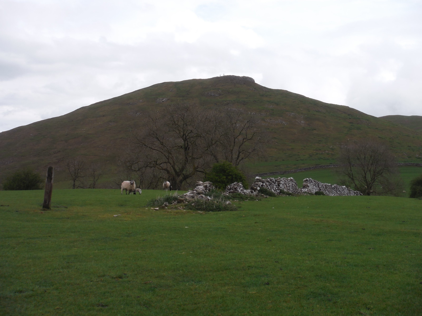 Thorpe Cloud, just before descent into Dovedale SWC Walk 326 - Dovedale (Ashbourne Circular)