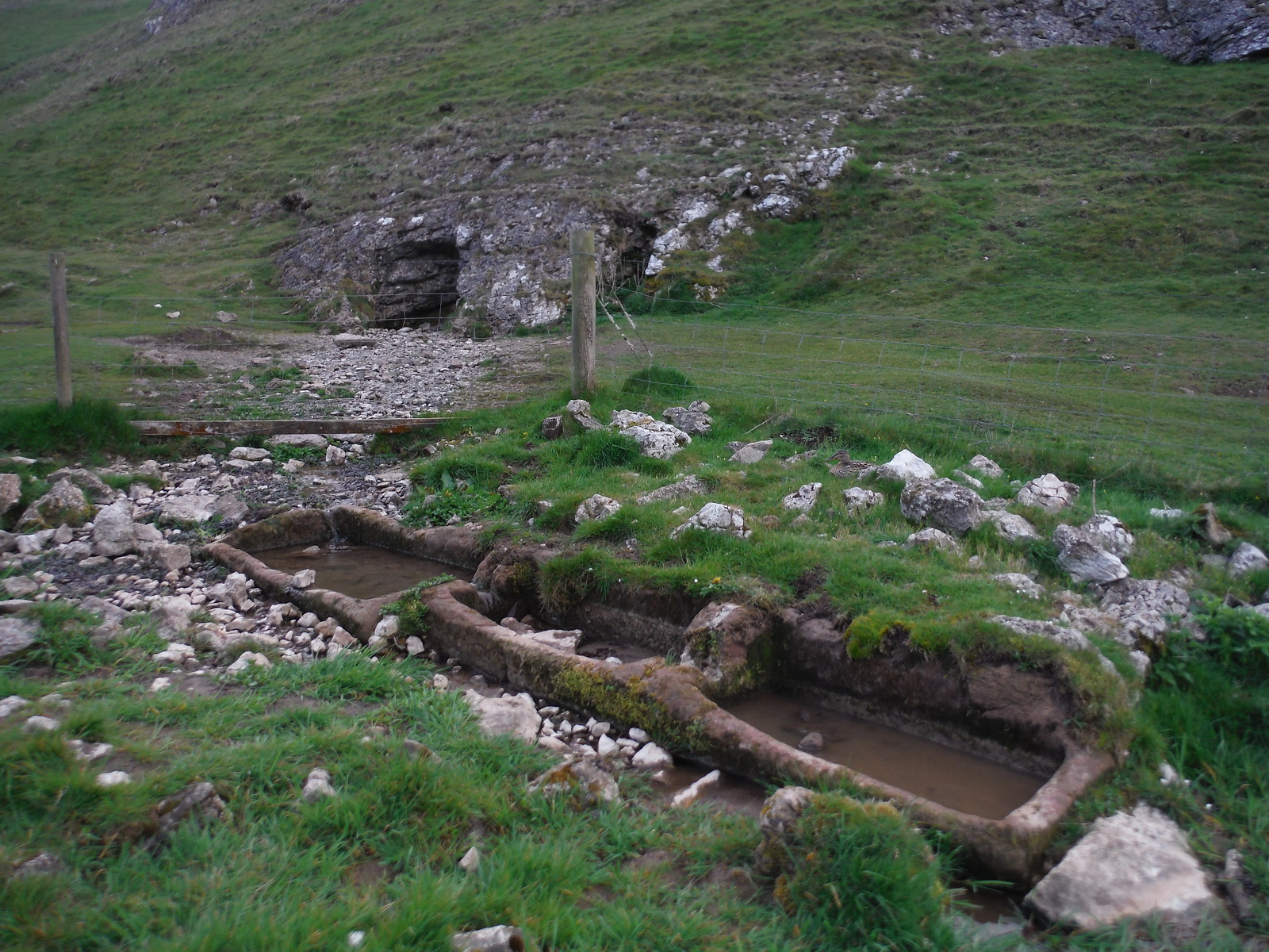Spring gushing out of the base of Thorpe Cloud into Cress Beds, Lin Dale SWC Walk 326 - Dovedale (Ashbourne Circular)