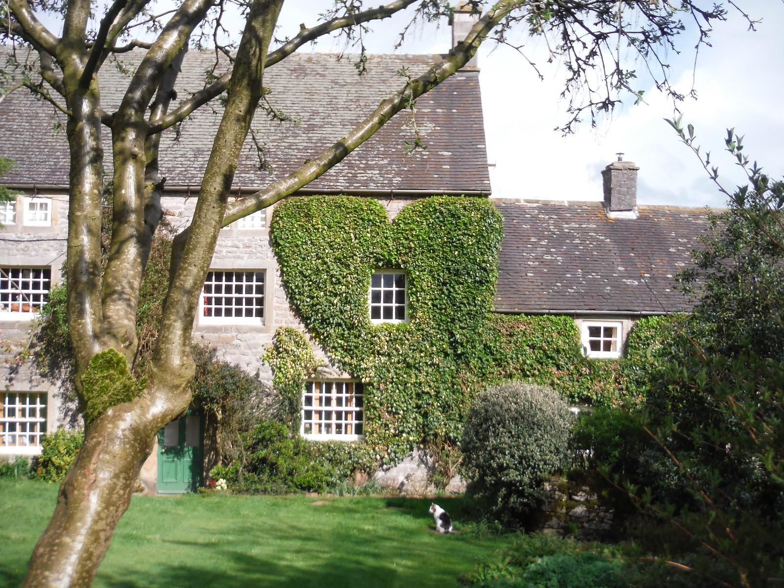 Heart-Shaped Ivy, Church Farm, Stanshope SWC Walk 326 - Dovedale (Ashbourne Circular) [Long Version via Alstonefield]