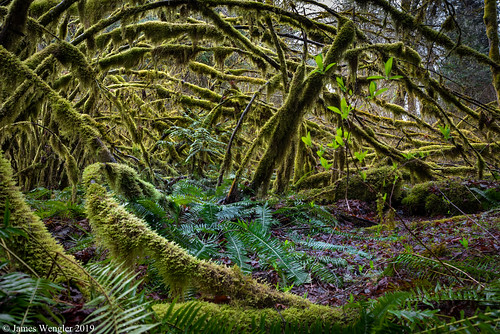 elwhavalley elwhariver olympicnationalpark washington olympicmountains spring vinemaple washingtonstate