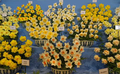 Walkers Bulbs display of daffodils