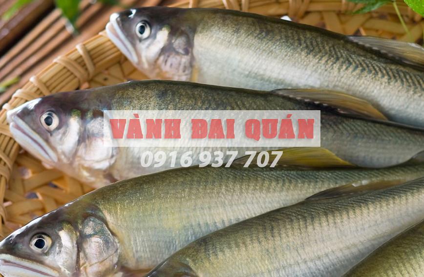 Cá-đối-nướng-muối-ớt Hải sản tươi sống tại TP. Cần Thơ VÀNH ĐAI QUÁN 0915 32 6788