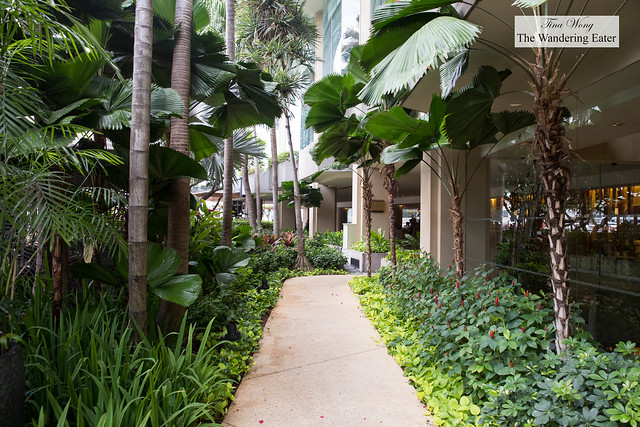 Tropical walkway