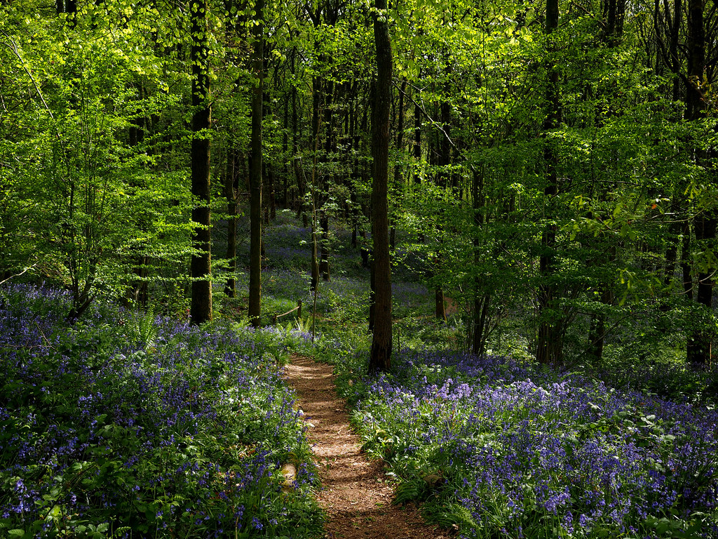 Franks Walk, Leith Hill, Surrey