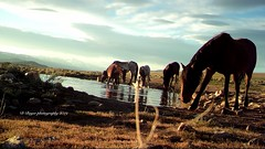 Trail Cam Photos at Watering Hole in Wild Horse Country