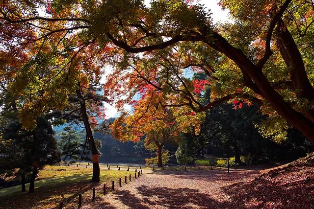 Hamarikyu Gardens shade