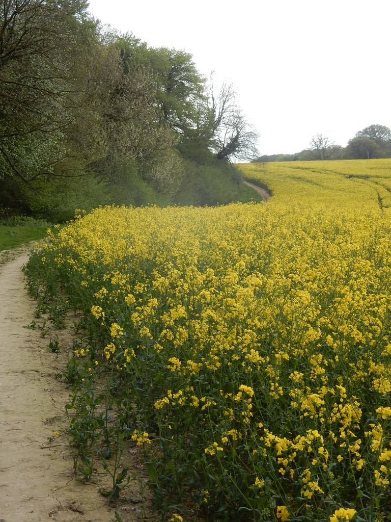 Rapefield Goring Circular via Hill Bottom