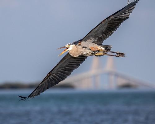 outdoor seaside shore sea sky water nature wildlife 7dm2 ef100400mm ocean canon florida bird bif flight