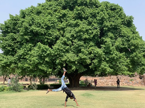 City Landmark - The Summertime Pilkhan Tree, Feroz Shah Kotla
