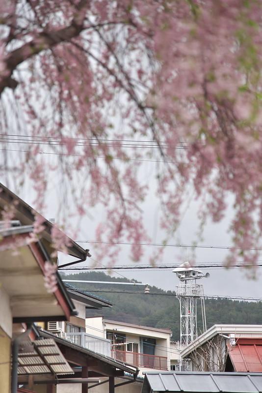 長野県岡谷市の枝垂れ桜
