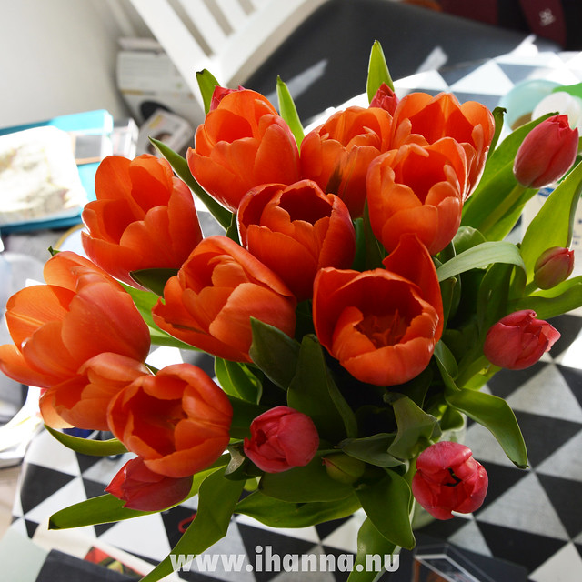 Red and orange tulips for iHanna