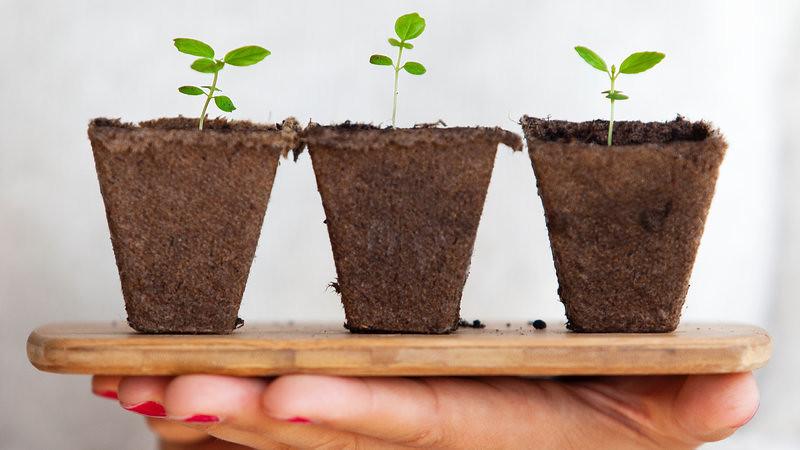 Ayurvedic Plants – Medicinal Plants & Its Uses with Hindi Name