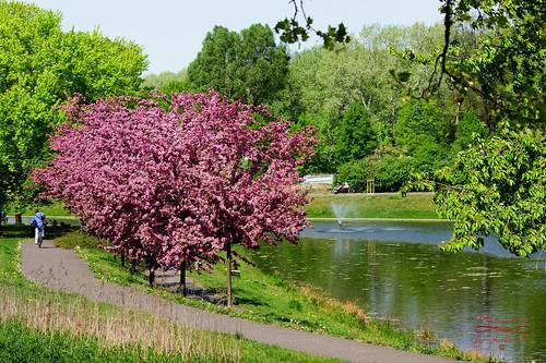 warsaw warszawa poland polska park citypark capitalcity trees spring wiosna water jurekp2 sonya77