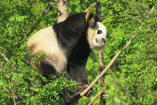 Bei in the tree