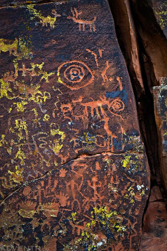 Lichen & Petroglyphs