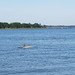 Seabrook Island Dolphin 1, SC