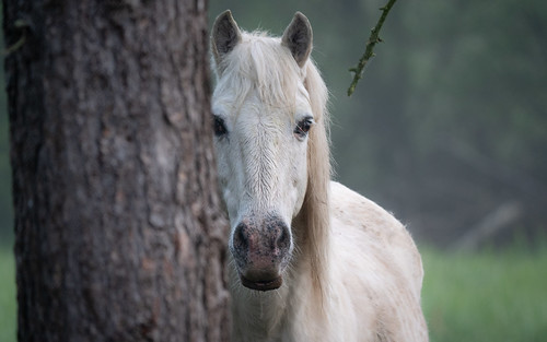 Cheval Camargue | by Sébastien Simon