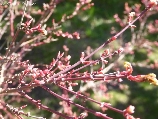 Grüße aus meinem Aprilgarten ...
