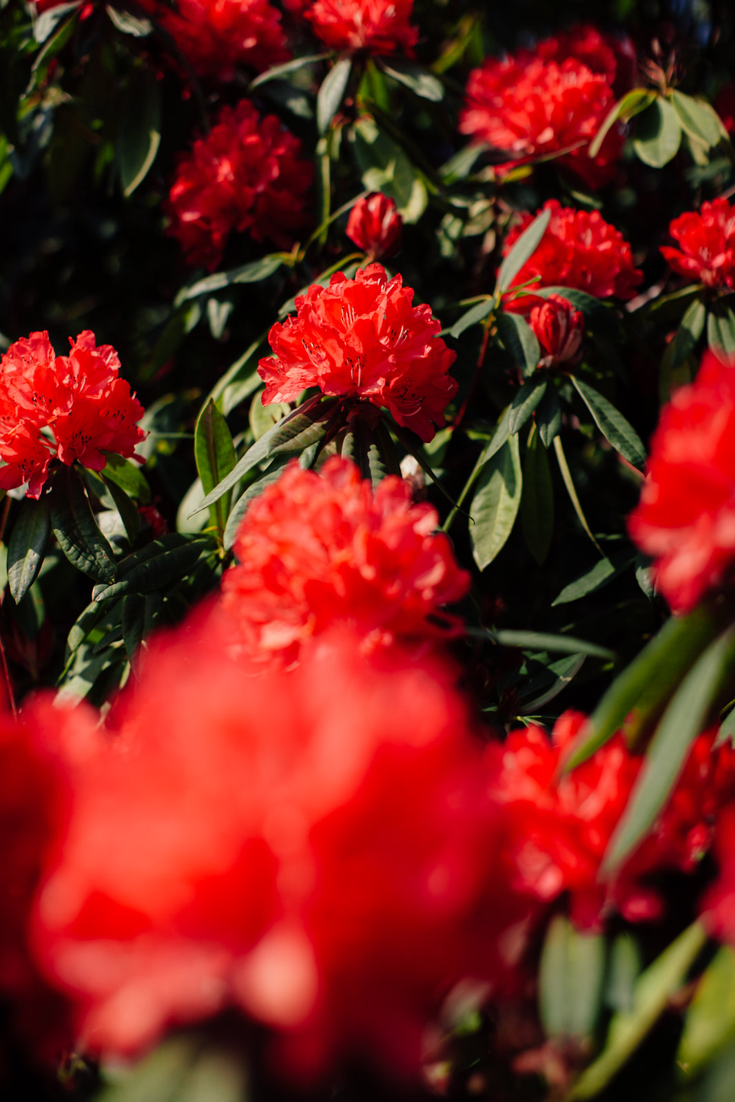 red dress-21