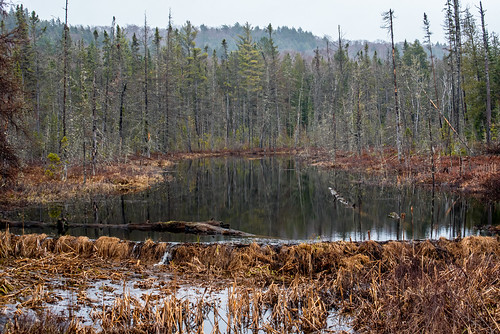 Algonquin Park | by Stephen Downes