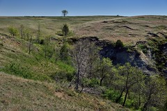 A Fold Across the Earth and a Lone Tree Up Top (Theodore Roosevelt National Park)