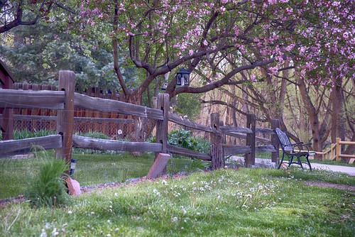Park Bench Fence and Flowers