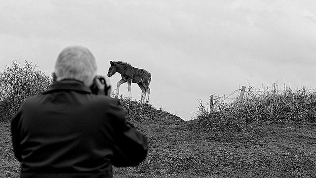 Horse and camera