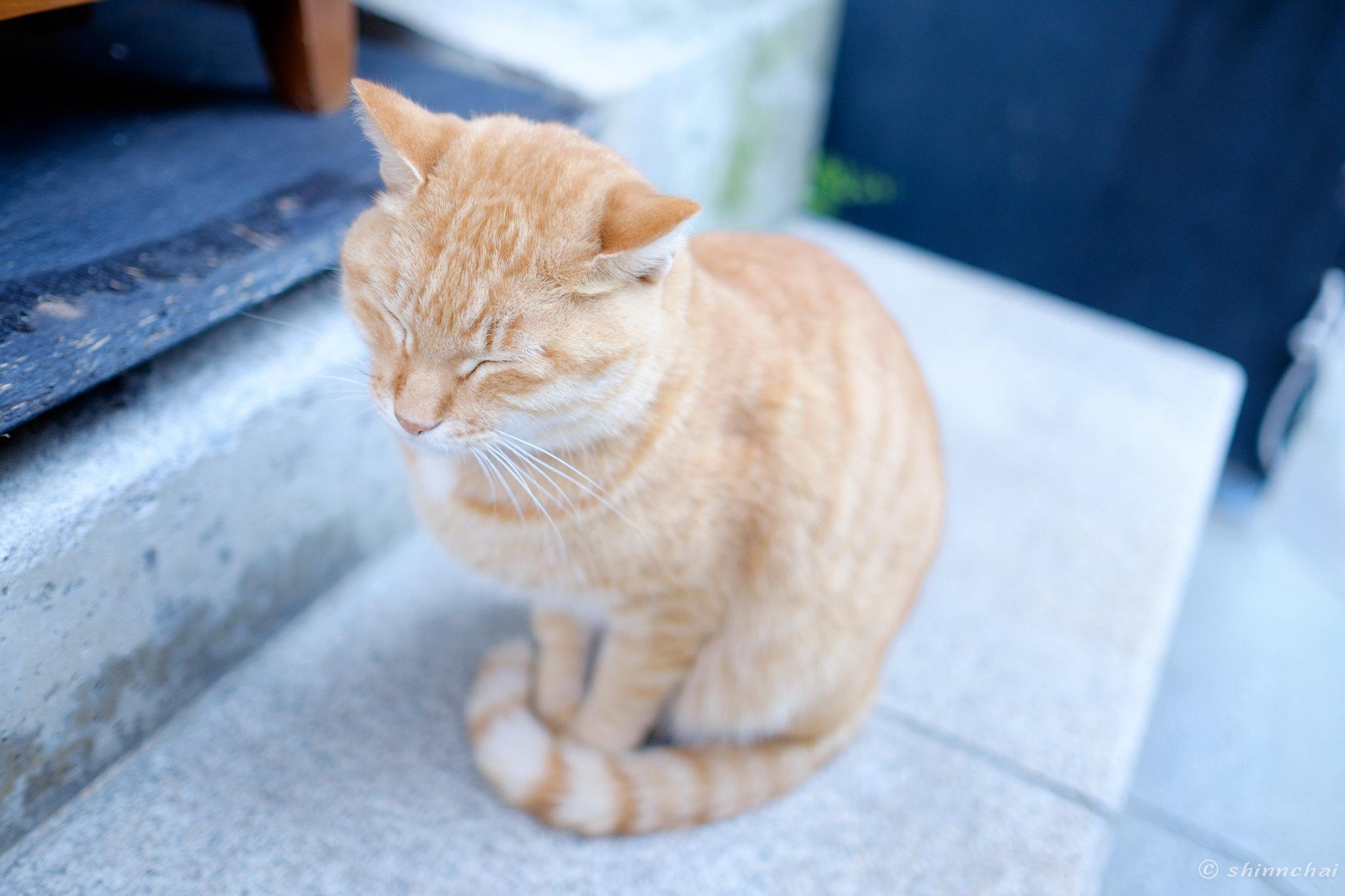 xf23mm f1.4 rの作例 レビュー 画質 江ノ島 猫