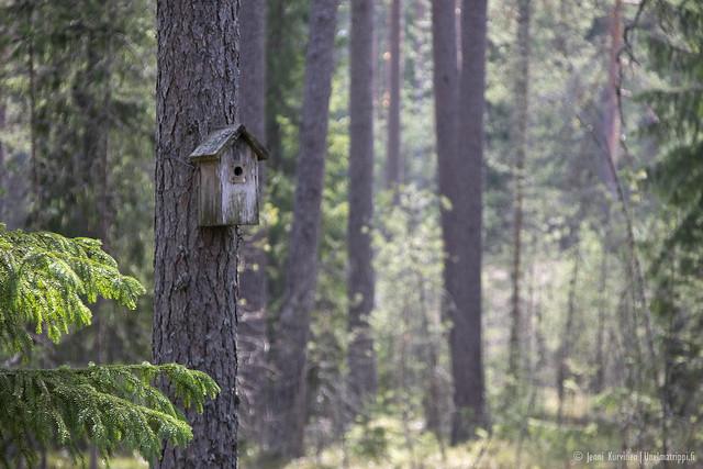 Teijon kansallispuistossa Matildassa