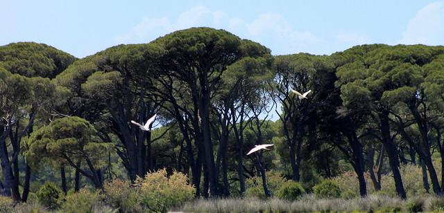 Δασος Στροφυλιας -Wald von Strofilia - Strofilia Forest