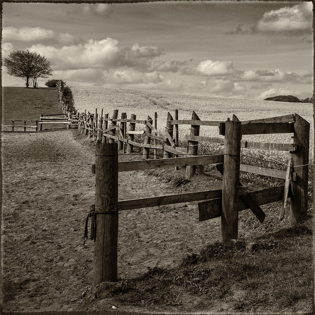 Fence at Lee, Monochrome