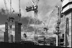 profusion of cranes