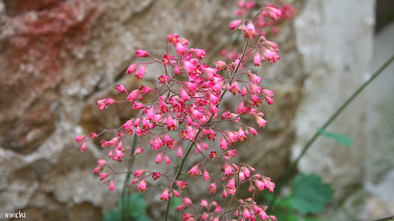 Flores Montardit de Dalt