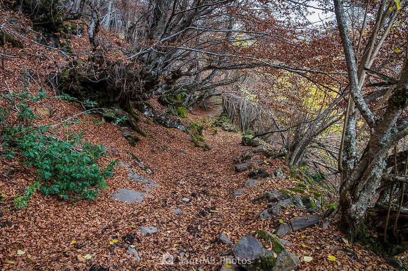 Parte superior del Bosc de Carlac