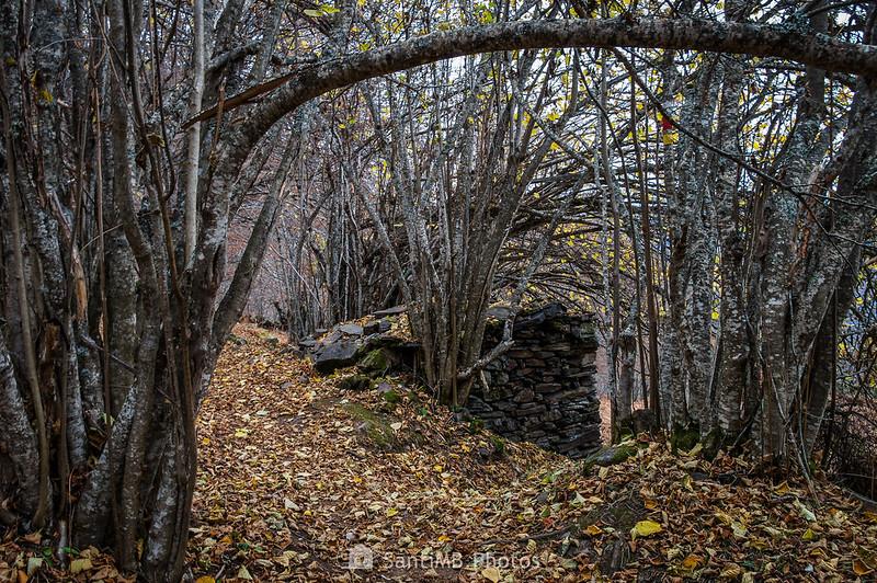 Cabaña de piedra sobre el Bosc de Carlac