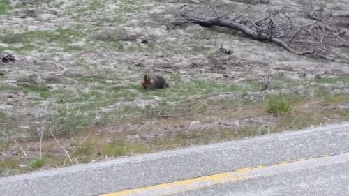 Roadside Wildlife