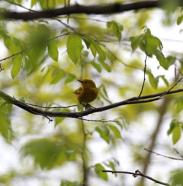 yellow cutie