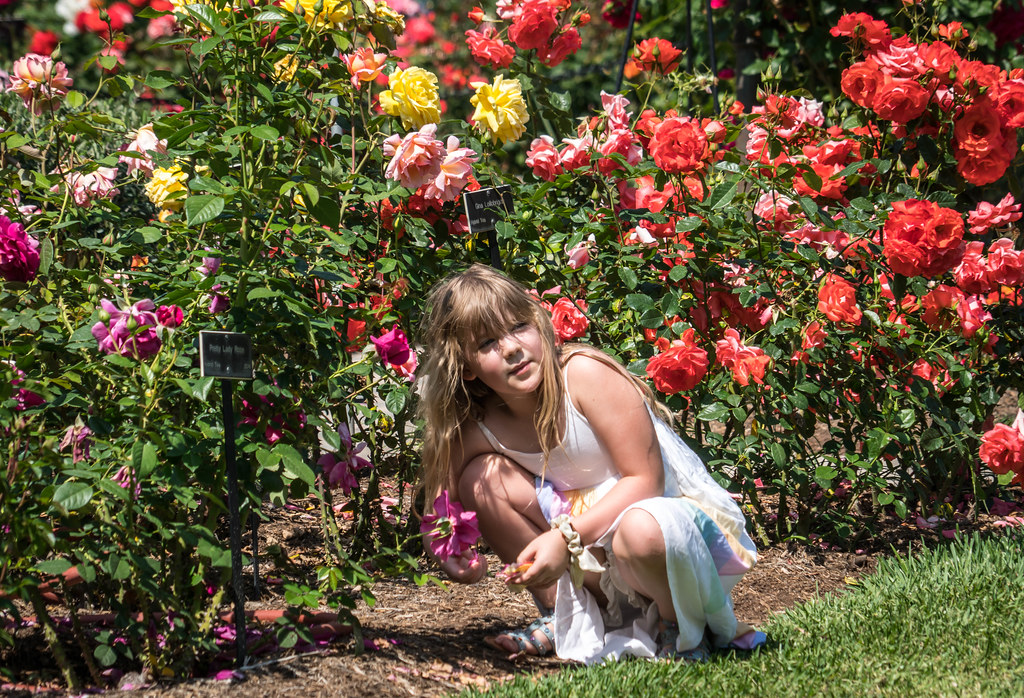 Little Girl In The Rose Garden Huntington Library Bota Flickr