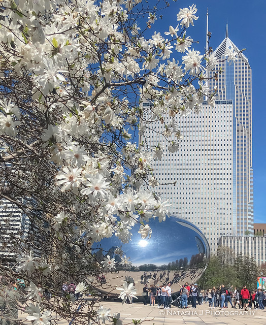 FINALLY we have beautiful weather this weekend!  Chicago. The Bean in Millennium Park