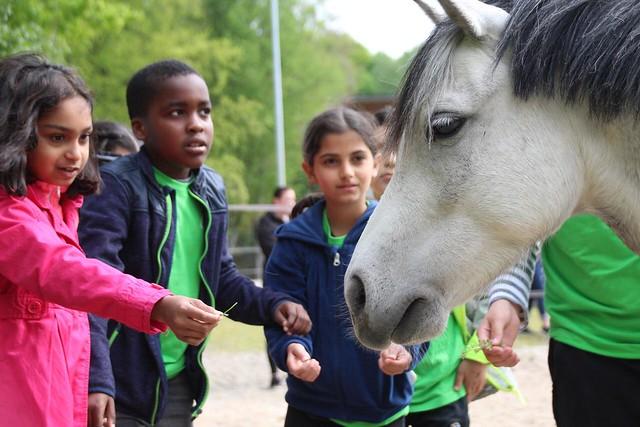 Werken als een paard vakantieschool 2019