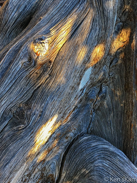 Light Speckled Tree Trunk