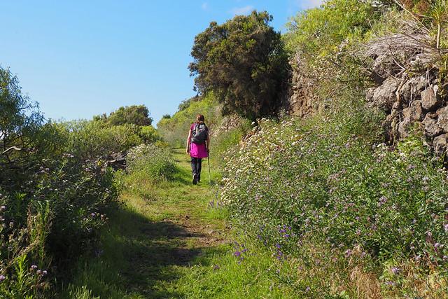 Bushy paths, La Palma, Canary Islands
