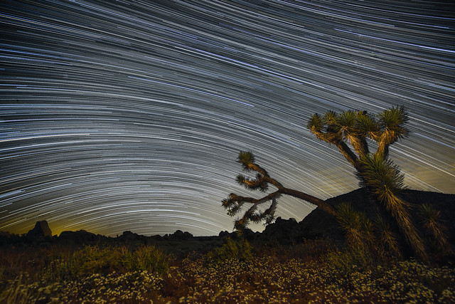 Star Trails with Wildflowers Superbloom