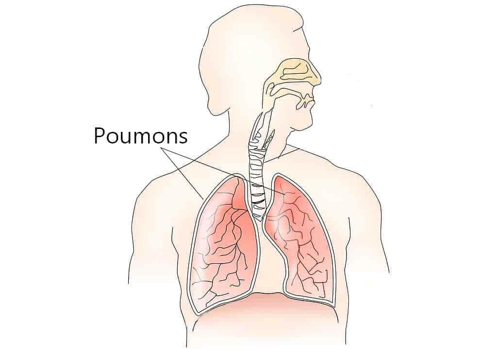 poumon-3