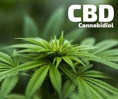 CBD Cannabidol Oil Stock Photo, Free To Use