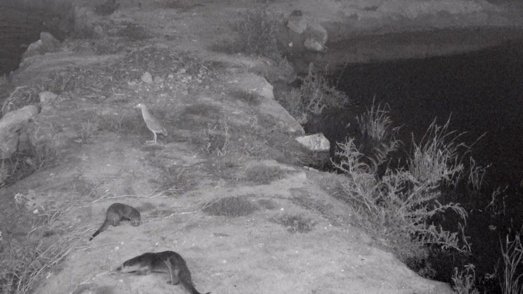 東海大學生命科學系在金沙溪進行生態監測。(畫面提供 東海大學生命科學系)