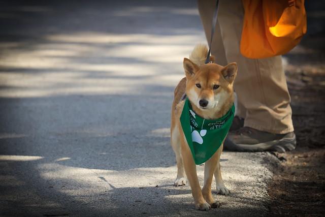 Dog-Days '19, Morton Arboretum. 4 (EOS)